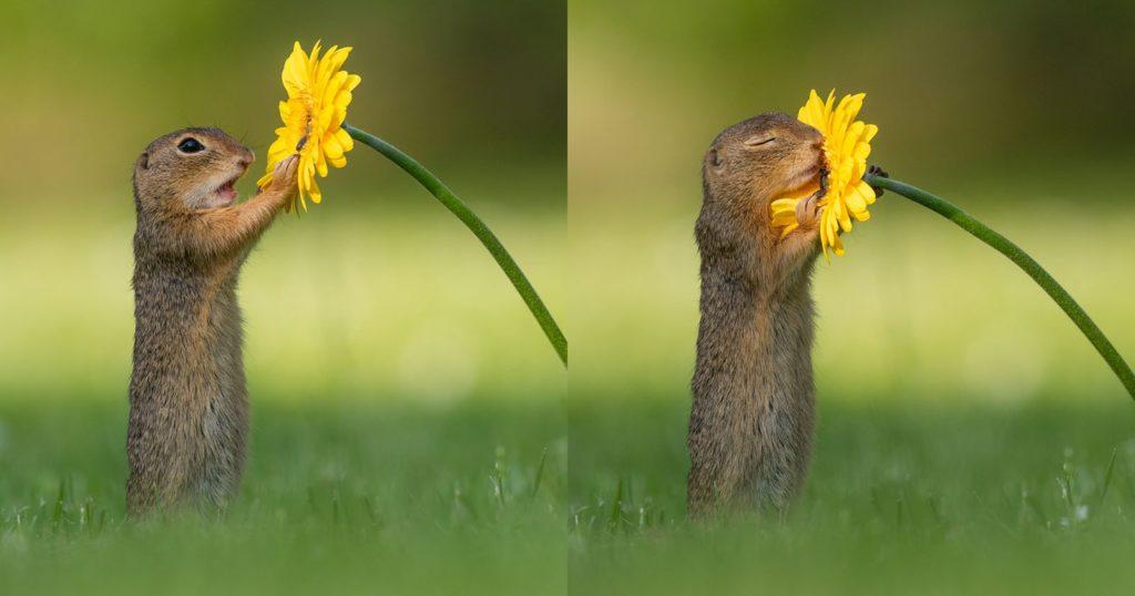 суслик и цветок