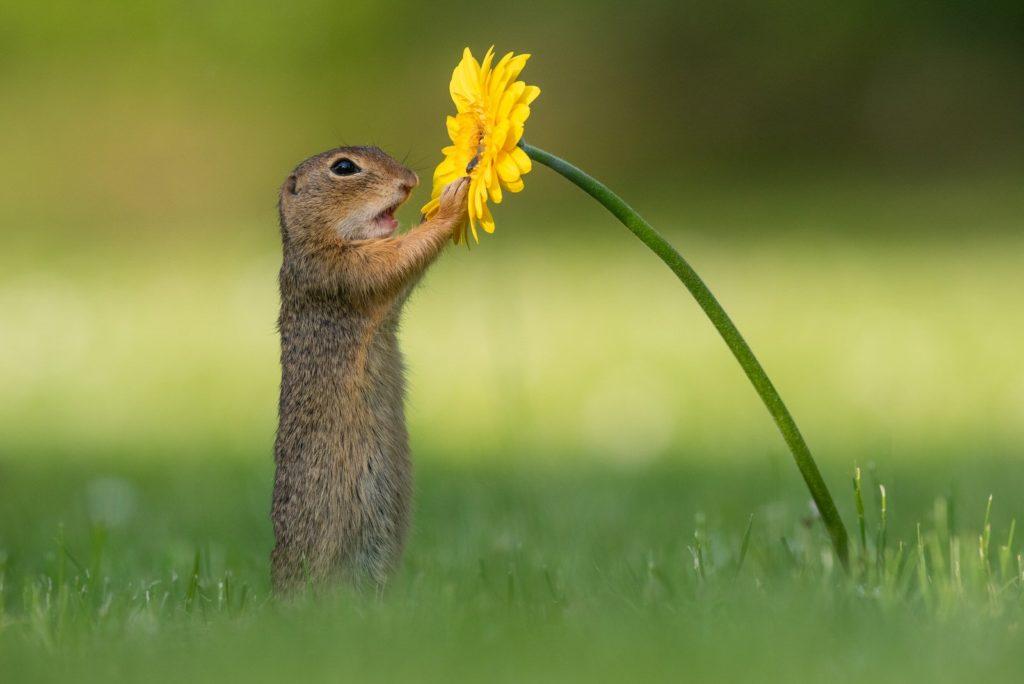 суслик подошел к цветку